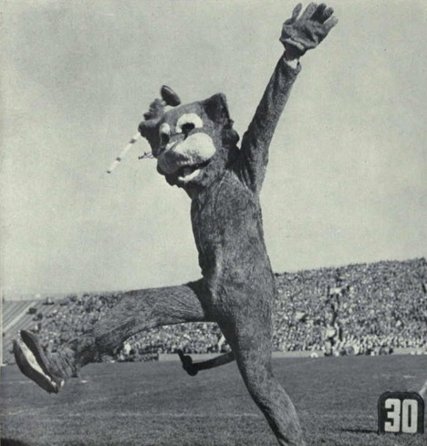 https://upload.wikimedia.org/wikipedia/commons/9/9b/Willie_the_Wildcat_%281961%29.jpg